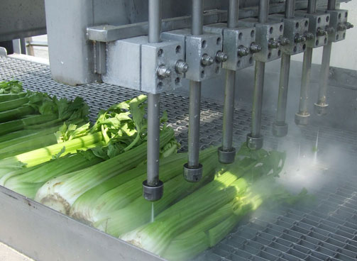 GRID-KMT-AQUALINE-WATER-ONLY-CONVEYOR-CUTTING-CELERY